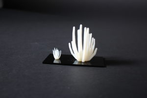3D-Printed Model of a Agave